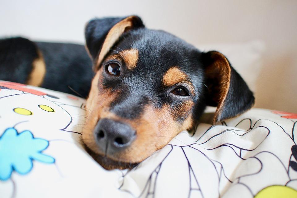 Sacramento proíbe a venda de cães, gatos e coelhos em lojas de animais