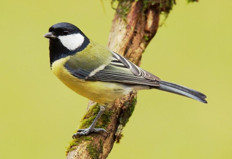 Aves escolhem vizinhos com personalidades semelhantes às suas
