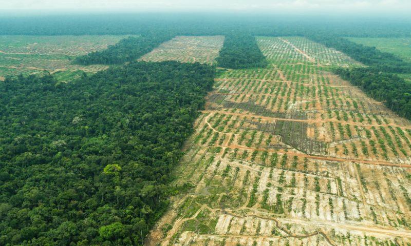 Peru perdeu quase 2 milhões de hectares de floresta amazónica em 15 anos