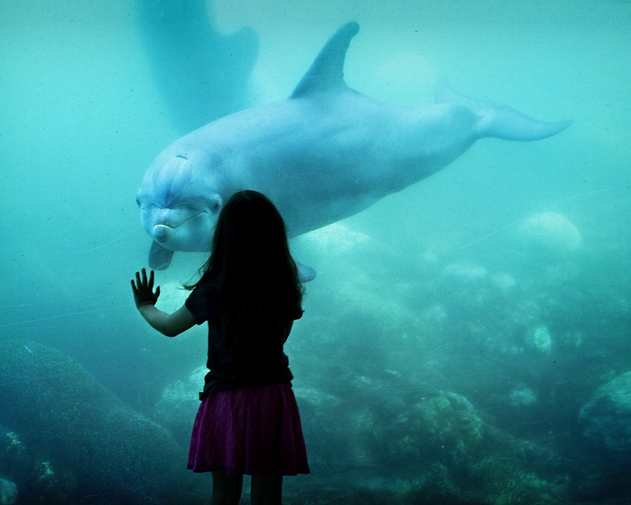 Vancouver proíbe cativeiro de golfinhos e baleias no seu aquário