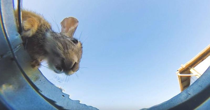 Quantos animais conseguem beber água num balde no deserto?