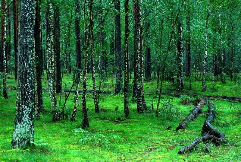 """UE dá """"último aviso"""" à Polónia para parar desflorestação numa das mais antigas florestas europeias"""