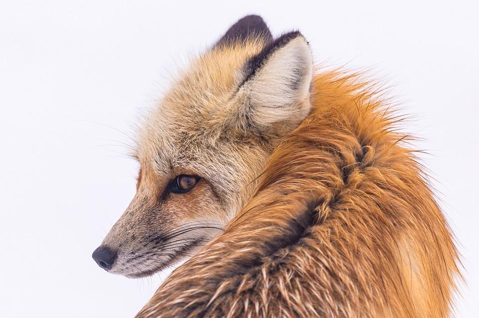 Poluição sonora está a invadir as áreas protegidas e a ameaçar a vida selvagem