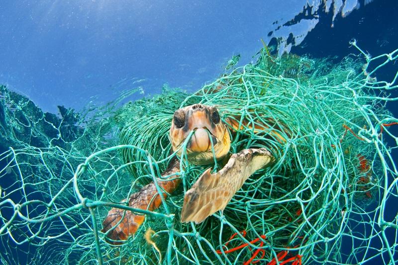 """Redes de pesca """"fantasma"""" continuam a matar animais muito depois de serem abandonadas no mar"""