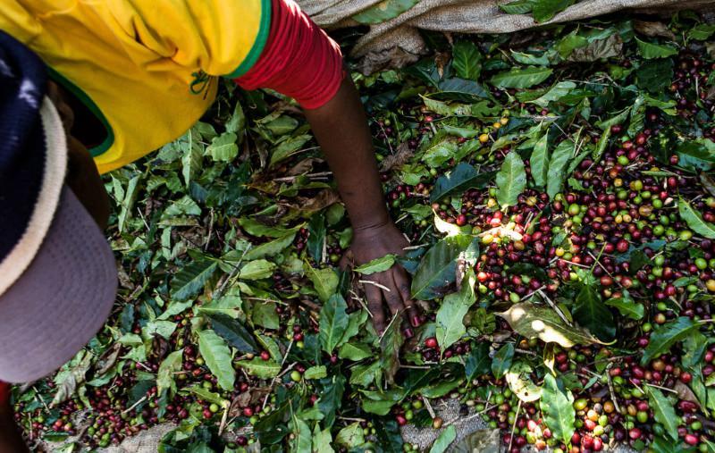 Nestlé admite que o seu café pode ter sido produzido com trabalho escravo no Brasil