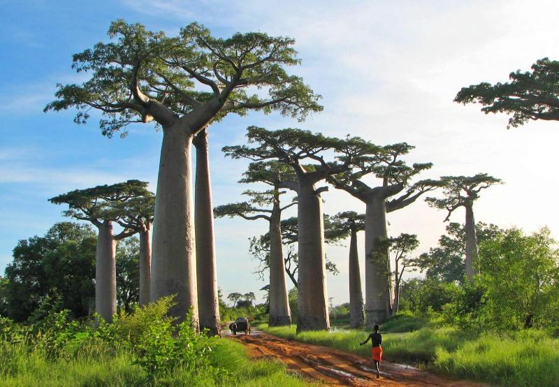 """Descobertas florestas """"perdidas"""" que cobrem uma área equivalente a 60% da Austrália"""
