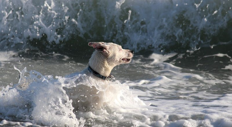 Portugal já tem duas praias para cães
