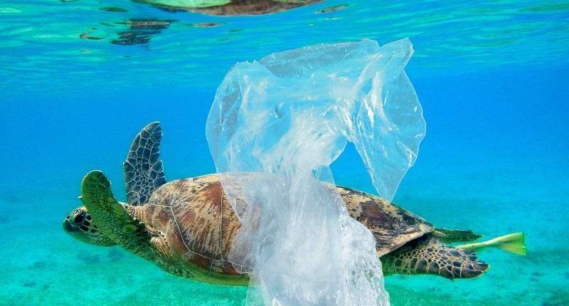 Fotos chocantes mostram o que o nosso lixo plástico faz aos animais