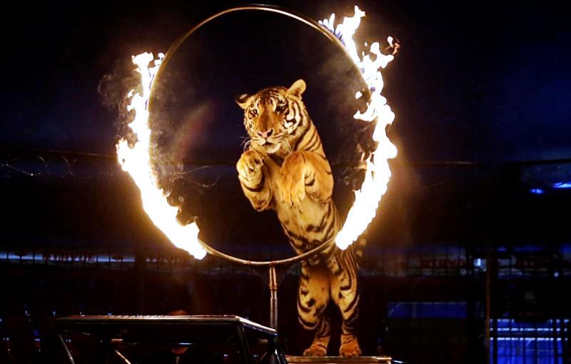 Roménia proíbe circos com animais selvagens