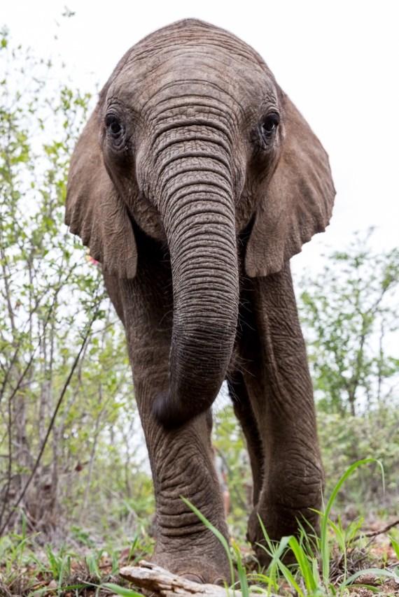 A cria de elefante Timisa