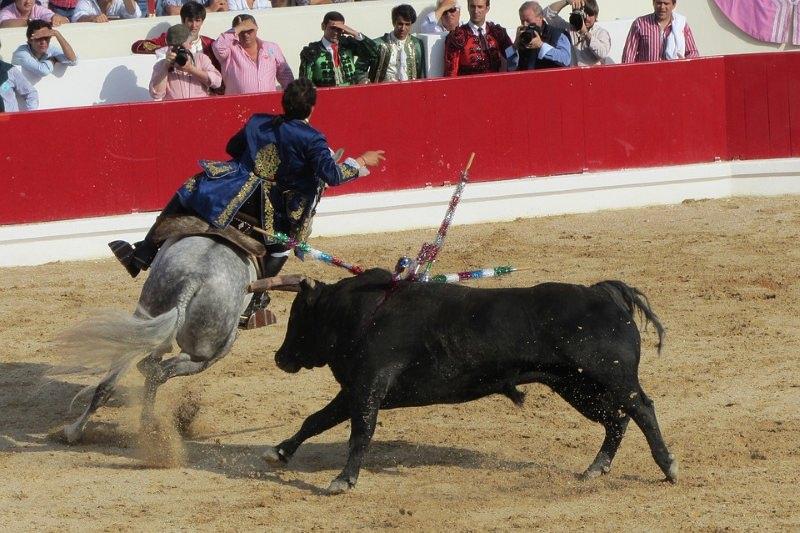 """Santa Maria da Feira declara-se """"município livre de touradas"""""""