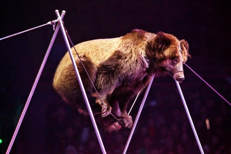 Nova Iorque proíbe os circos com animais selvagens