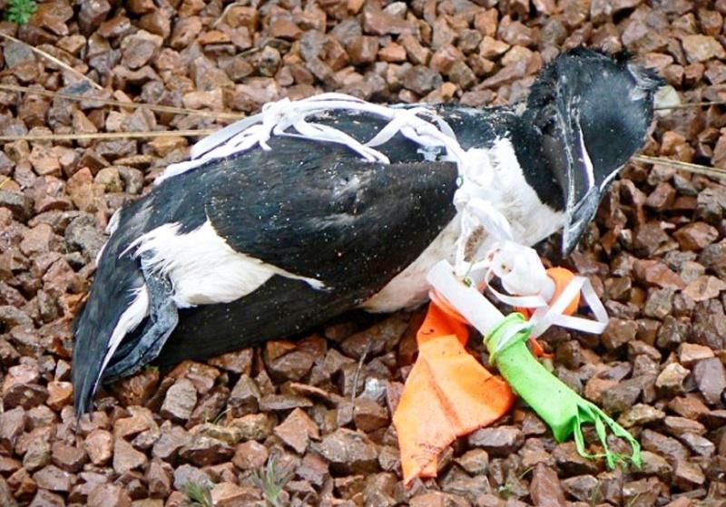 Os balões que largamos matam aves marinhas, tartarugas, cavalos e outros animais