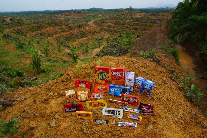 Nestlé, Pepsico e Unilever acusadas de cumplicidade na destruição ilegal de florestas tropicais