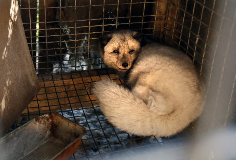 República Checa vota a favor da proibição das quintas de produção de peles de animais