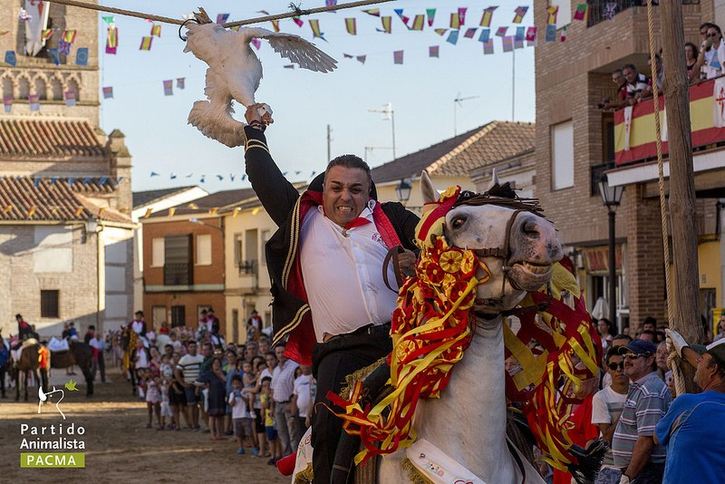 As festas tradicionais espanholas onde se decapitam gansos presos em cordas