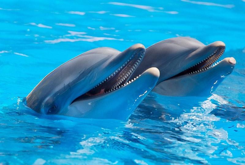 Cidade do México proíbe espetáculos e exibição de golfinhos em cativeiro