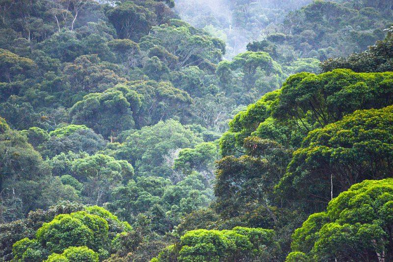 Desflorestação da Mata Atlântica no Brasil cresceu quase 60%