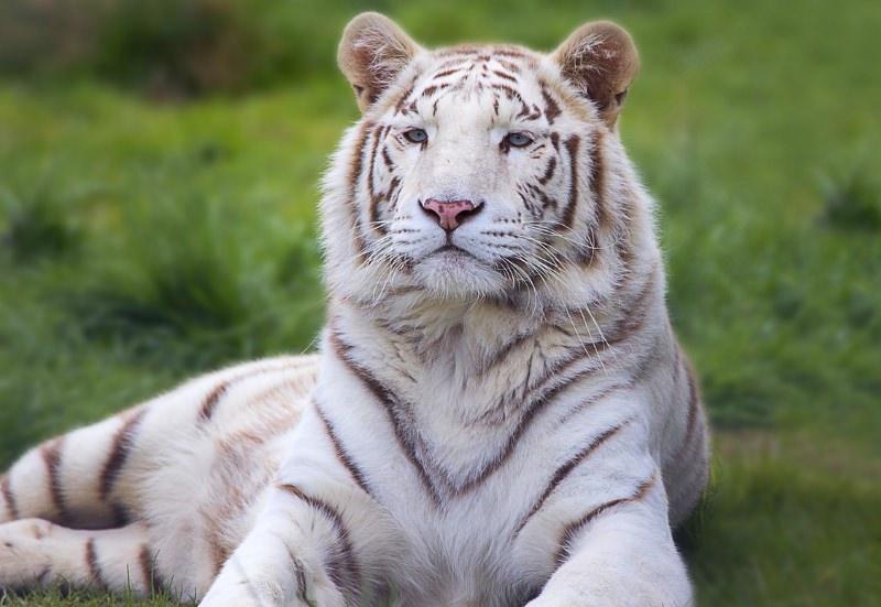Eslováquia vai proibir os circos com animais selvagens