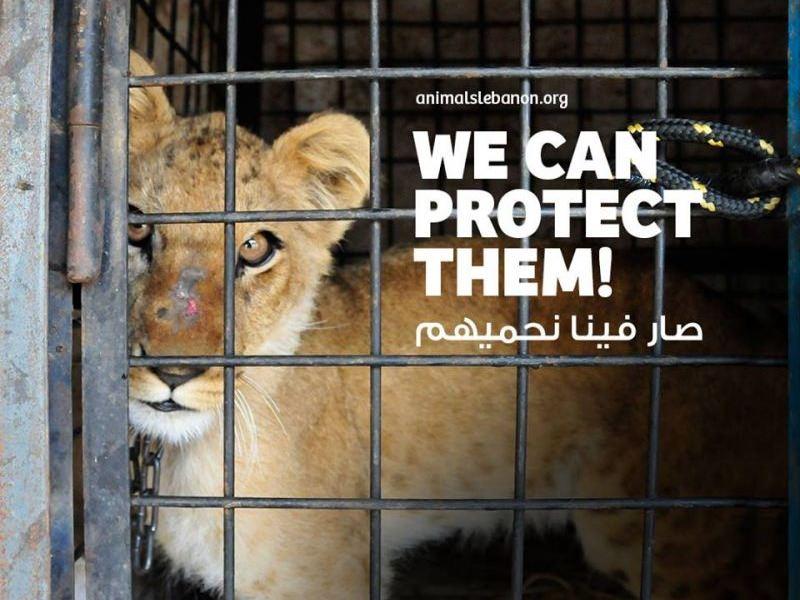 Líbano aprova a sua primeira lei de proteção dos animais