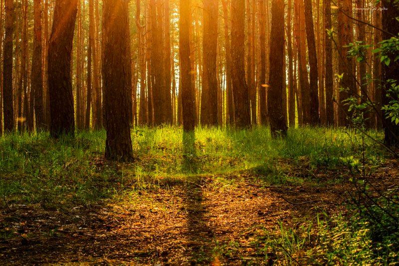 """Tomar """"banhos de floresta"""", a prática japonesa que a ciência diz que melhora a saúde"""