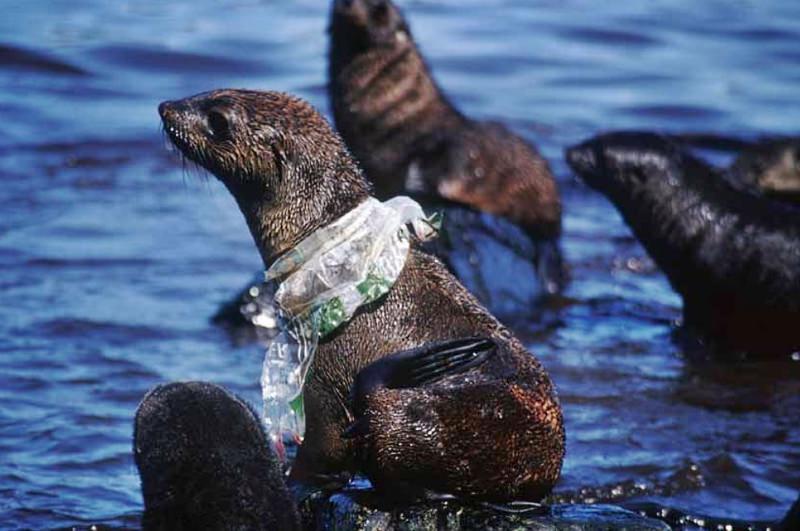 Já são mais de 1400 as espécies afetadas pelo lixo que despejamos nos oceanos