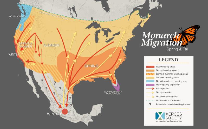 Mapa da migração das borboletas-monarca nos EUA