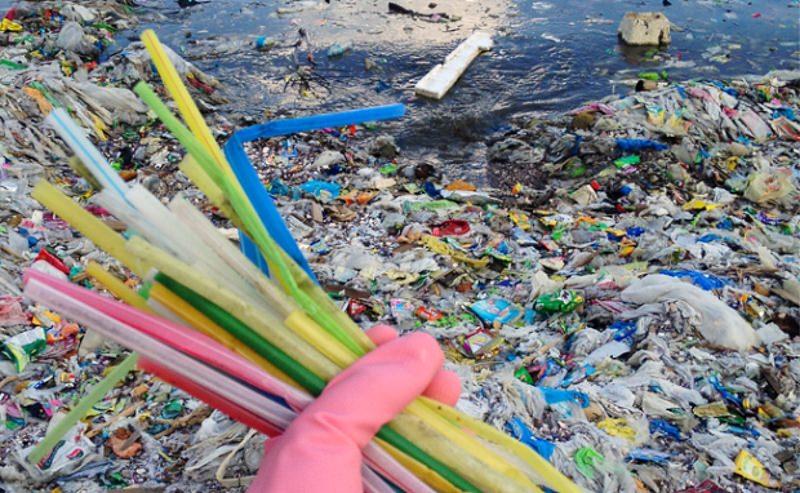 Vai um desafio? Este mês, recuse todas as palhinhas de plástico para proteger a vida marinha