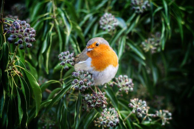 Um passeio para conhecer as aves da Mata do Choupal, em Coimbra