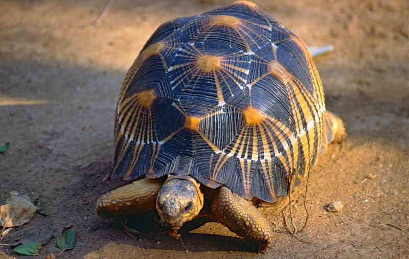 Criaturas mágicas ajudam na conservação de espécies ameaçadas, diz estudo