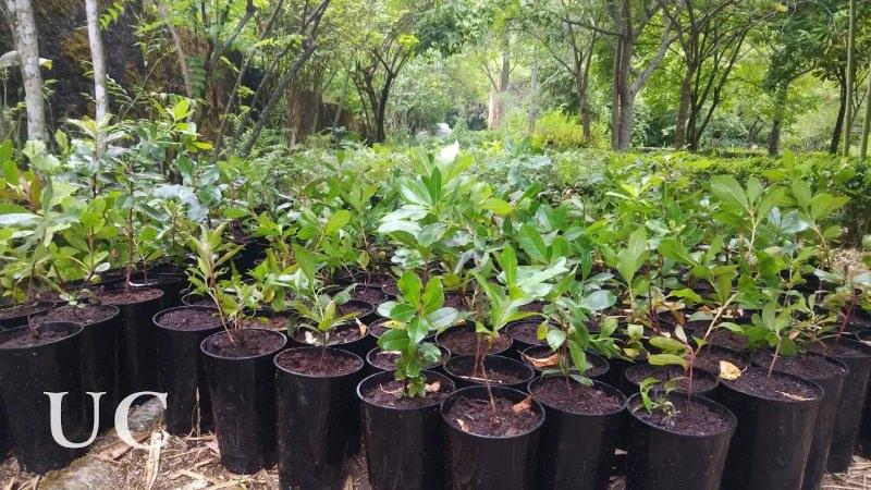 Universidade de Coimbra vai desafiar novos alunos a adotarem uma planta durante um ano