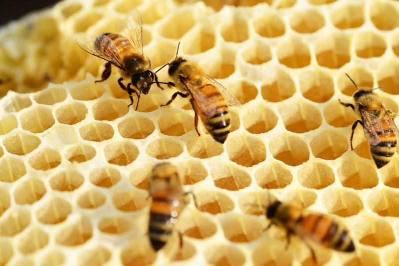 Pesticidas encontrados em 75% do mel testado
