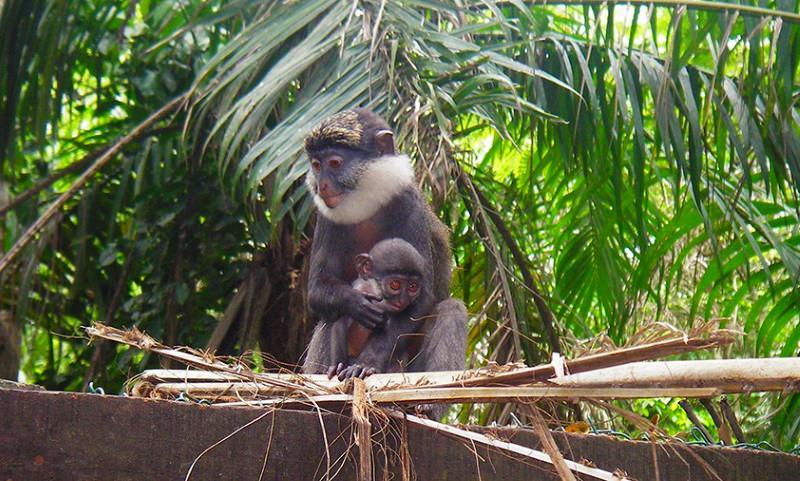 Floresta recuperada torna-se refúgio para espécies raras de animais e plantas em África