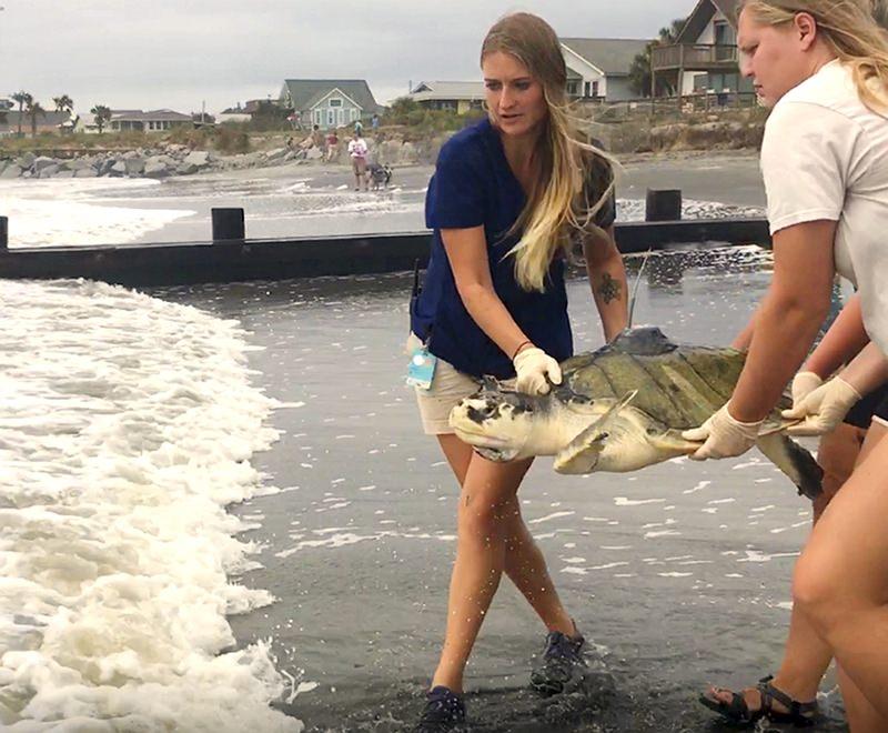 Tartaruga que engoliu fio de pesca é libertada de novo no oceano