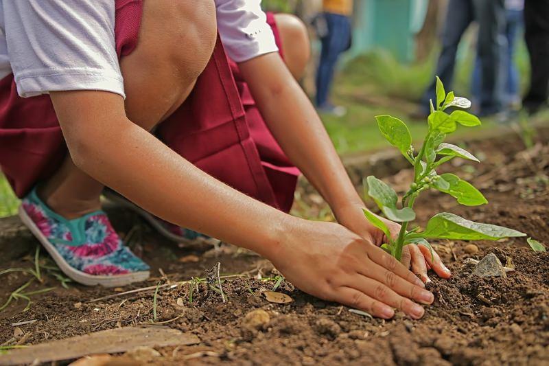 Criança a plantar