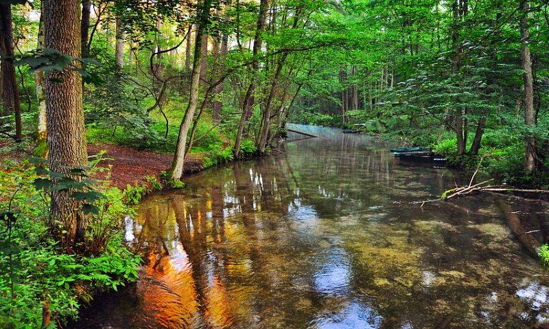 Remover plantas invasoras aumenta a biodiversidade nas águas dos ribeiros, diz estudo