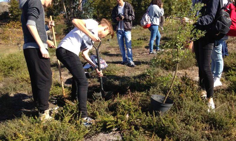 Póvoa de Lanhoso continua a plantar árvores autóctones