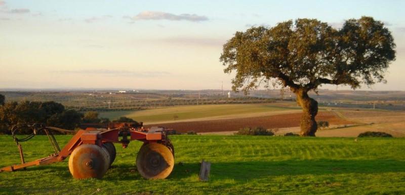 Avaliação independente revela que Política Agrícola Comum não serve os europeus