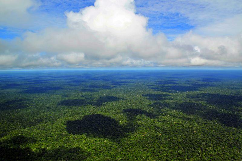 Biodiversidade vale mais do que soja e gado na Amazónia, defende Carlos Nobre [vídeo]