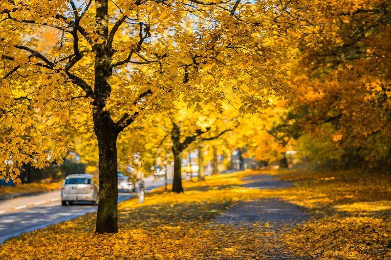 Árvores urbanas estão a crescer e a envelhecer mais rapidamente do que as rurais