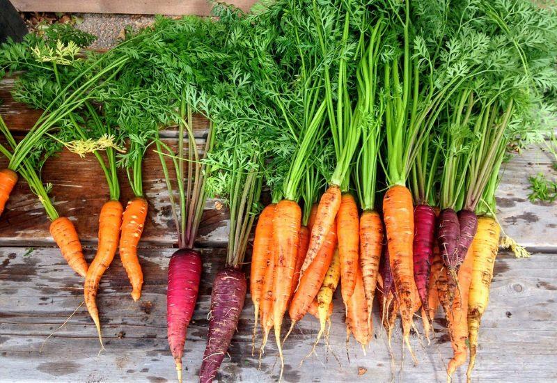 Agricultura biológica pode alimentar o mundo, se reduzirmos o desperdício alimentar e consumo de carne