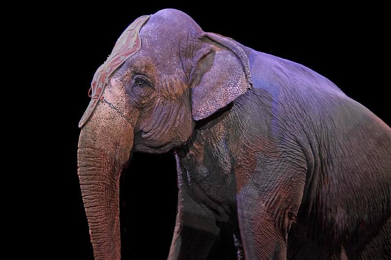 Será que o PAN vai conseguir proibir a utilização de animais nos circos em Portugal?