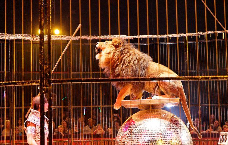 Circos com animais selvagens proibidos na Irlanda