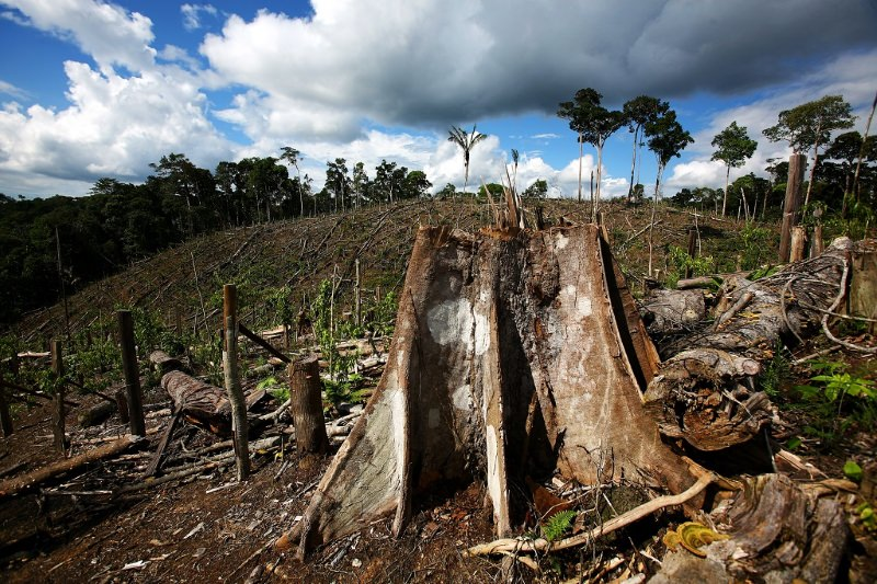 Gana e Costa do Marfim querem travar a desflorestação causada pela indústria do chocolate