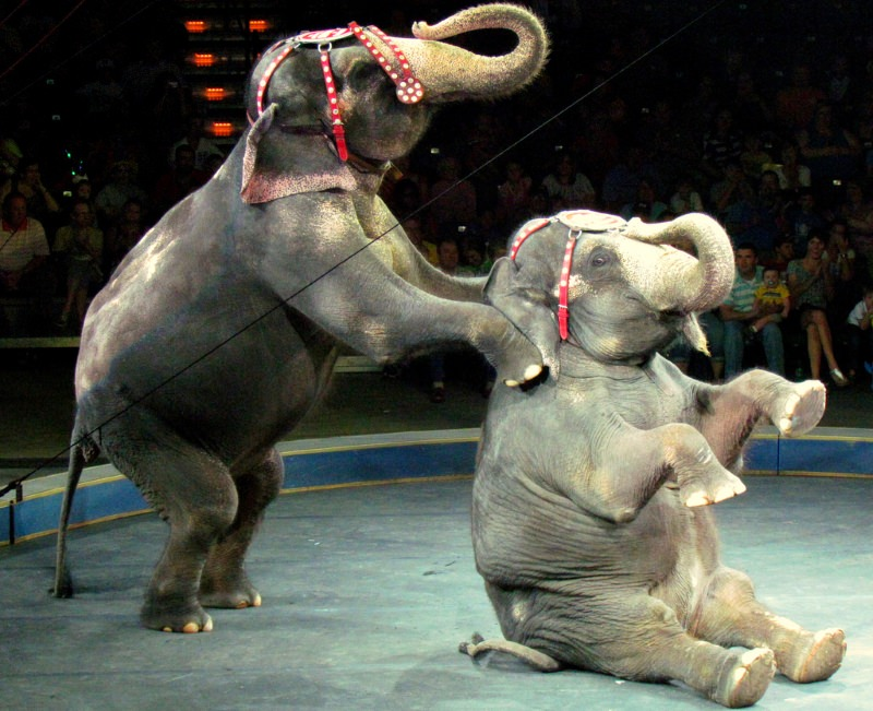 Índia proíbe circos que forçam animais selvagens a fazer truques