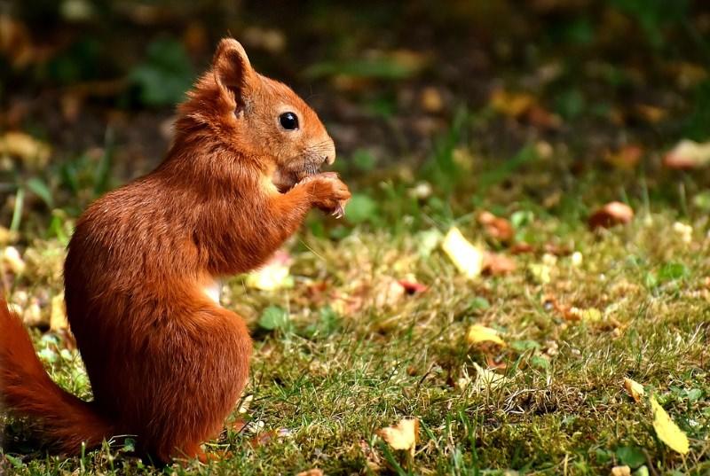 População ajuda biólogos a contar 1400 esquilos