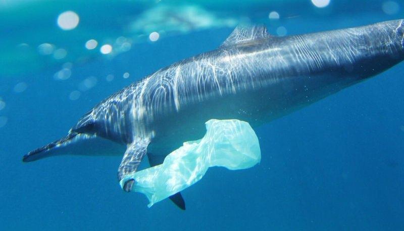 Plástico descoberto nos estômagos das baleias, golfinhos e botos da costa da Irlanda