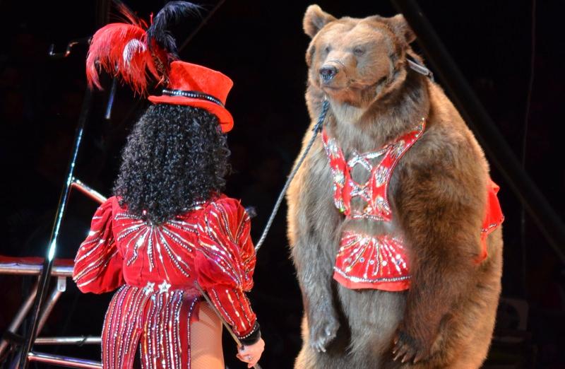 Itália proíbe os circos com animais selvagens. Outros países convidados a seguir exemplo