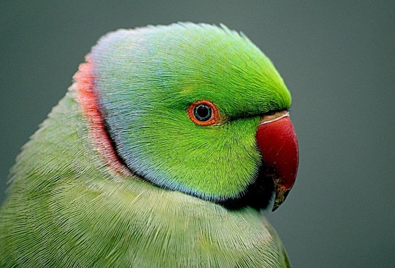Comércio mundial de aves selvagens cai 90% após proibição de importação na UE
