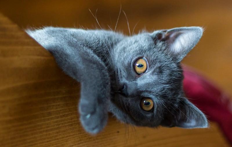 Cidade dos Estados Unidos proíbe a remoção das unhas dos gatos